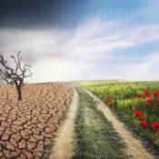 obraz kontrastu popękanej ziemi i kwiatów